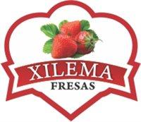 Agroindustria Xilema  SAS