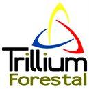 Forestal Trillium